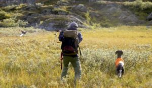 Small-game hunting on state-owned land between August 25 and September 15
